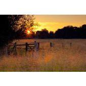 Dusk Meadows