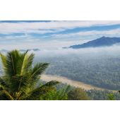 Coconut Mist